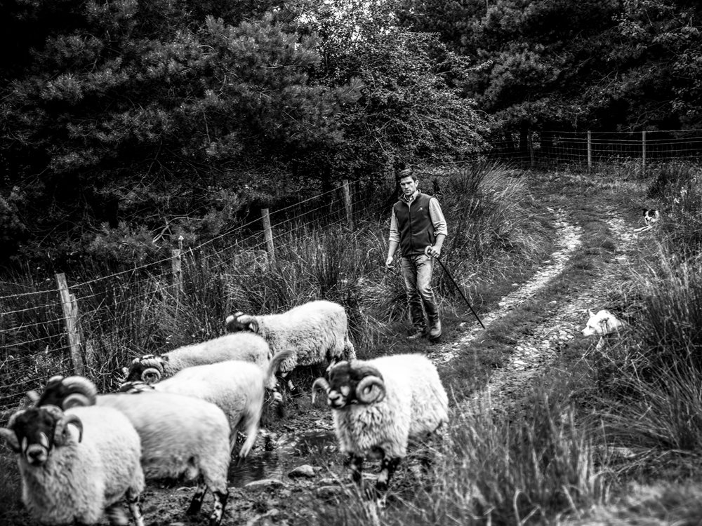 British Wool brand images