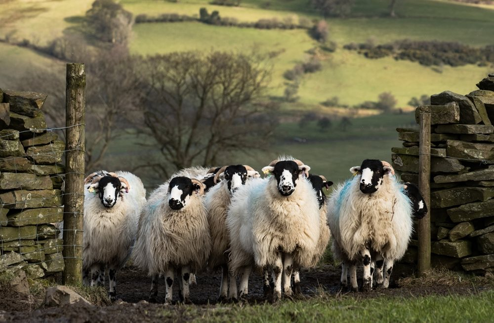 Find out more about the benefits of wool