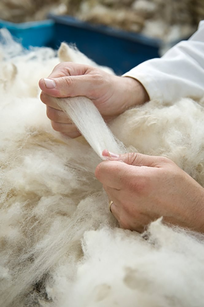 Maximise the value of your wool clip