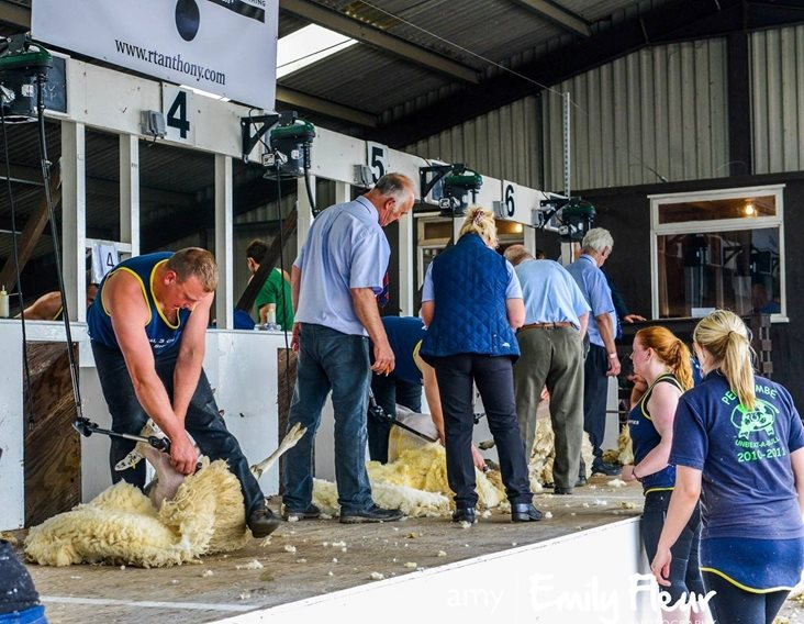 Cumbrian Farmer to represent England in world shearing competition