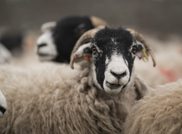 Petition for British Wool to be used in all public financed building projects