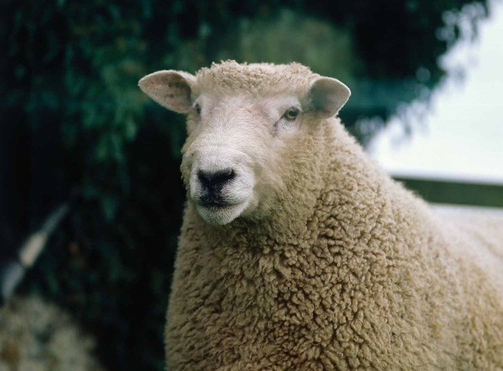 British Wool pays more says Hampshire sheep farmer