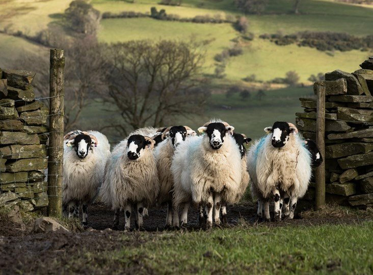 British wool - the science behind our amazing fibre