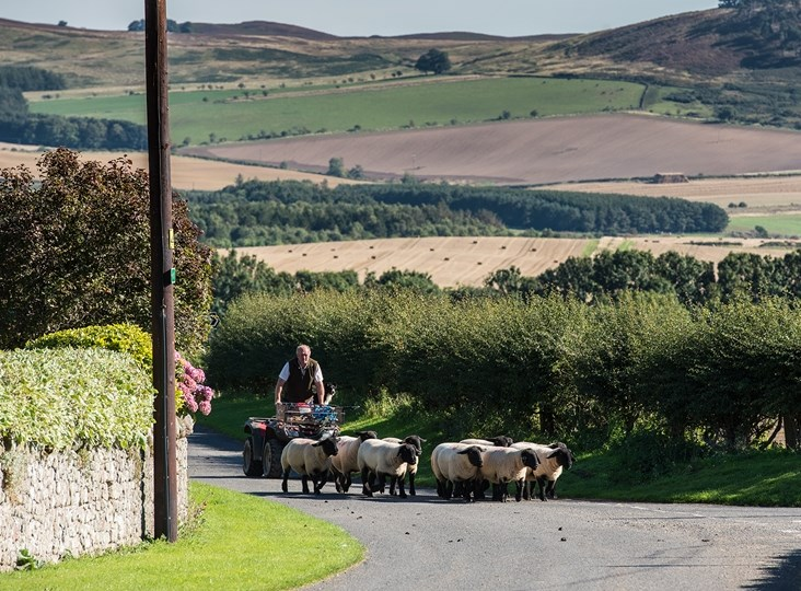 British Wool: supporting British farmers