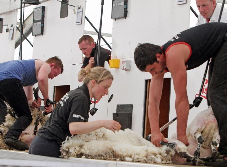 Wool handling – best practice, hints & tips