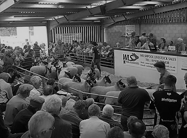 NSA and British Wool team up for exciting 'auction mart roadshow'
