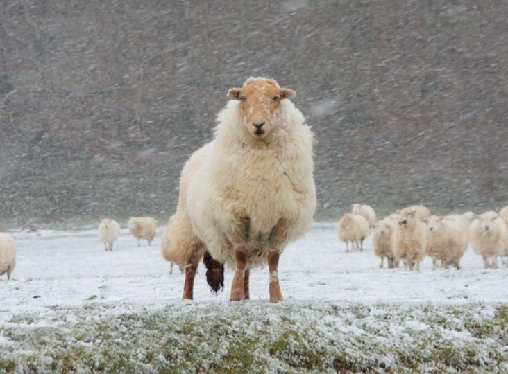 How wool keep us warm