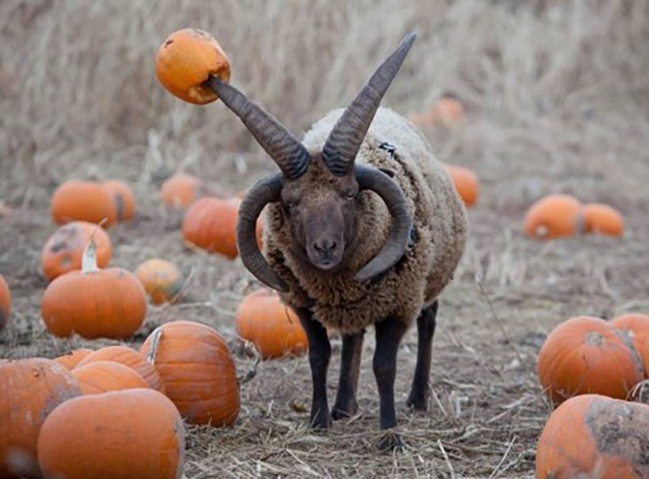 10 interesting facts about pumpkins