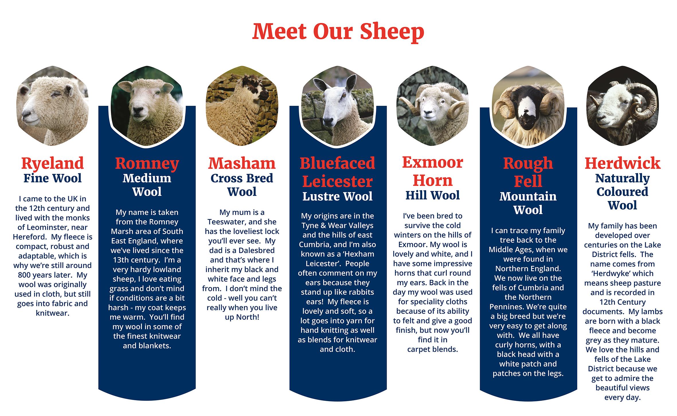 Sheep Breeds Wool Uk Britain British Wool
